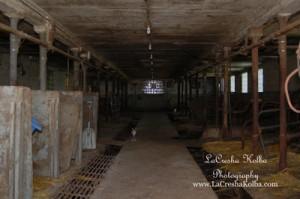 LK_FarmProject_015_