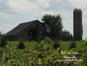 LK_FarmProject_026_