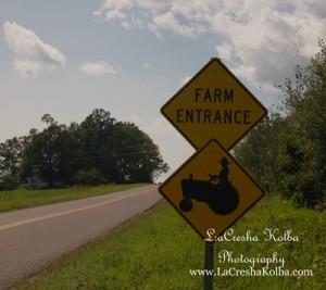 LK_FarmProject_031_